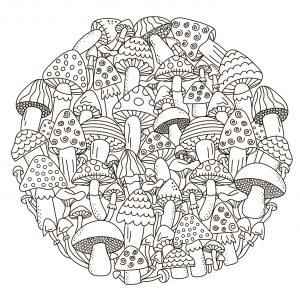 Shrooms shrooms shrooms shrooms shrooms shrooms shrooms...