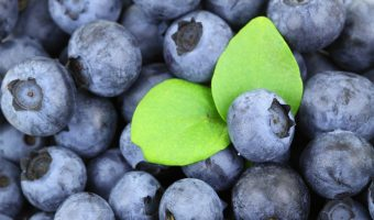 Pterostilbene Review: Powerful Berry Antioxidant for Long-Term Brain Health