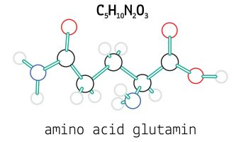 Glutamine Review: The Most Abundant Amino in the Body Plays Key Role in Cognition