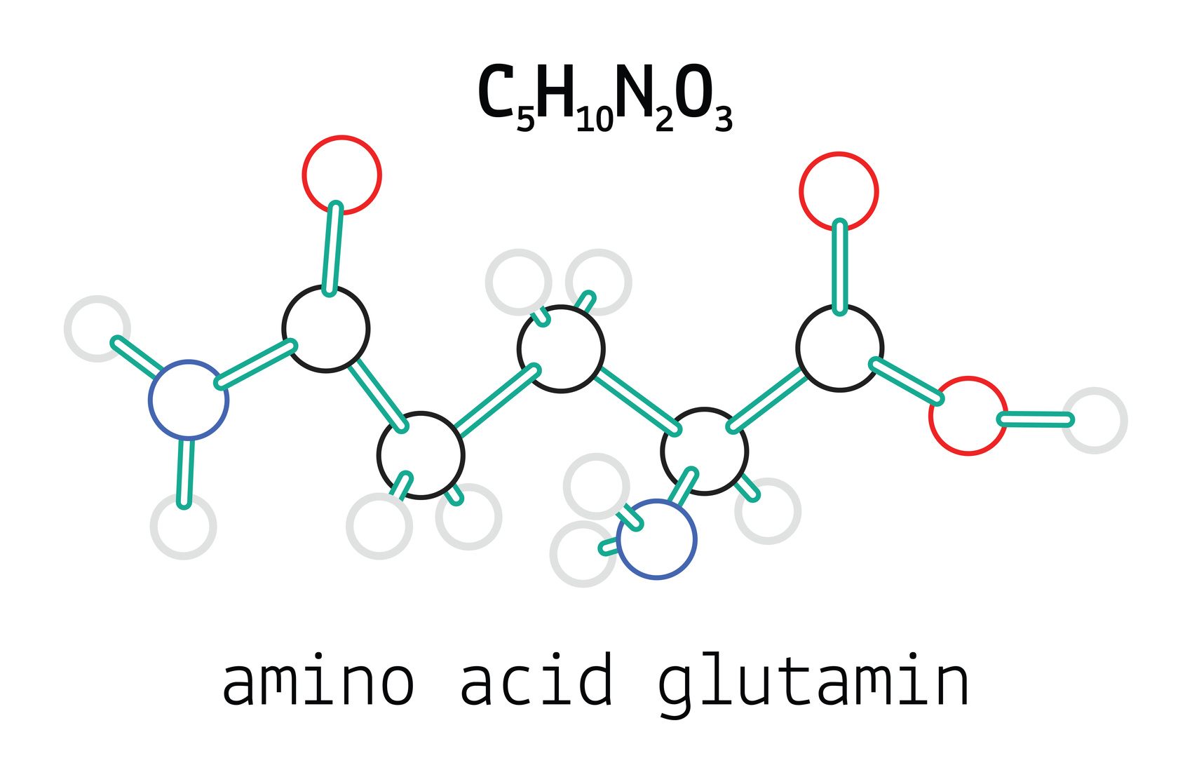 glutamine review the most abundant amino in the body