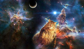 cat-in-space