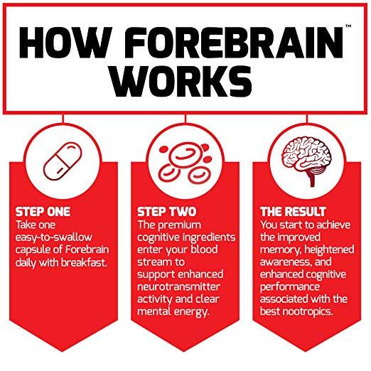 how forebrain works