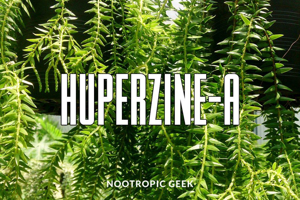 huperzine-a review nootropic geek